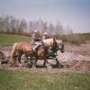 Disquer avec les chevaux